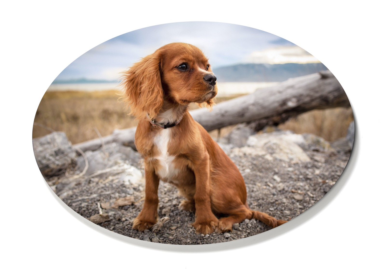 Puppy oval print - unique custom photo gifts