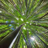 andrew shoemaker nature photographer of bamboo trees 1 starting to sell art online